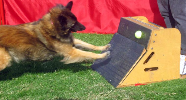 Изготавливаю спортивный инвентарь для собак Flyballb