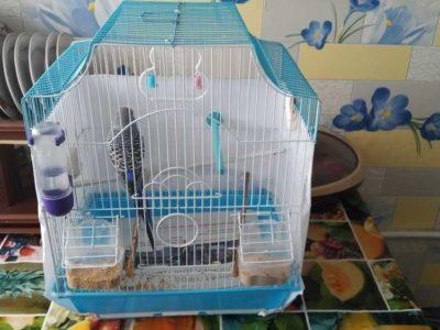 Продам попугая