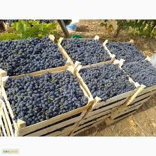 Покупаем виноград Молдова оптом
