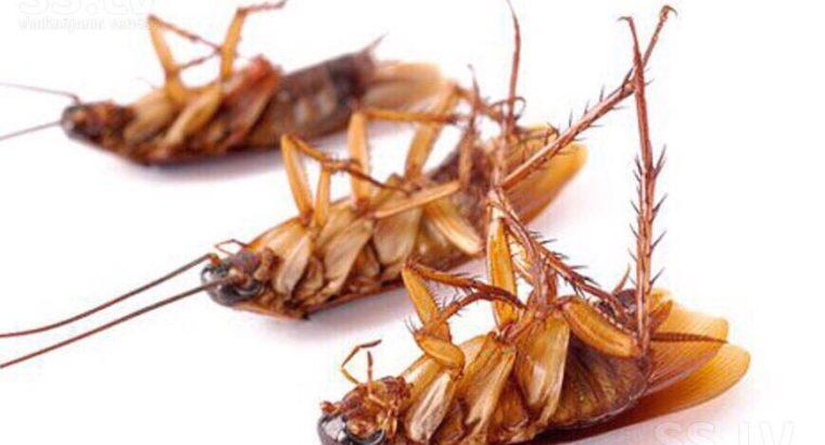Борьба с клопами и тараканами в ПМР