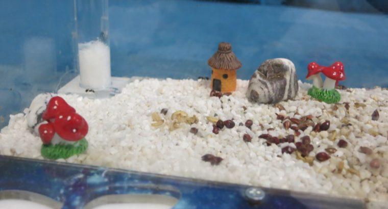 Продам формикарий (муравьиная ферма) (цена договорная)