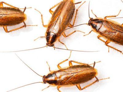 Травля клопов и тараканов