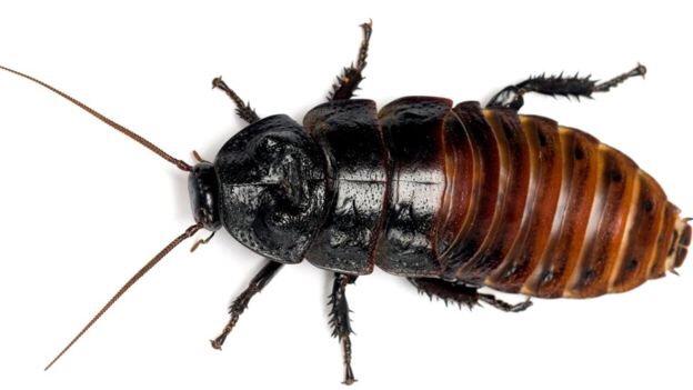 Избавиться от клопов и тараканов в ПМР