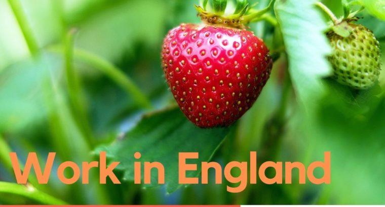 Работа в Англии!