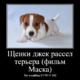 Щенки Джек Рассел терьера (фильм Маска)!!!