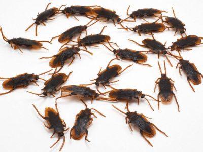 Средство от клопов, отрава от тараканов, чем травить клопов