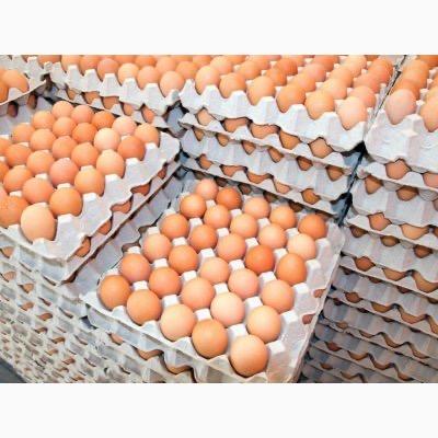Инкубационные яйца гусей маркированые