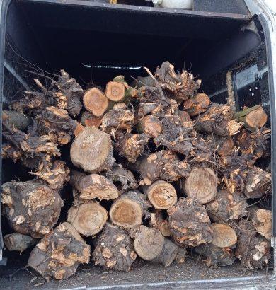 Продаём дрова галатушы и метроукицена договорная.